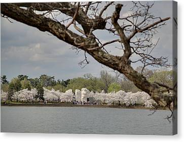 Blossom Canvas Print - Cherry Blossoms - Washington Dc - 011359 by DC Photographer