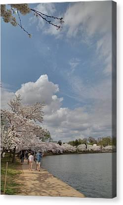Cherry Blossoms - Washington Dc - 011370 Canvas Print by DC Photographer