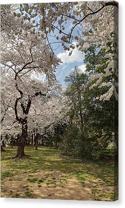 Sightseeing Canvas Print - Cherry Blossoms - Washington Dc - 011380 by DC Photographer
