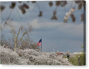 Cherry Blossoms - Washington Dc - 011381 Canvas Print by DC Photographer