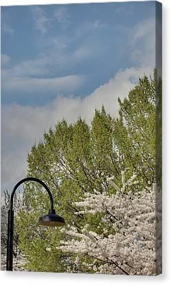Cherry Blossoms - Washington Dc - 011386 Canvas Print by DC Photographer