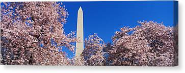Cherry Blossoms Washington Monument Canvas Print by Panoramic Images