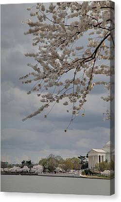 Metropolitan Canvas Print - Cherry Blossoms With Jefferson Memorial - Washington Dc - 011312 by DC Photographer