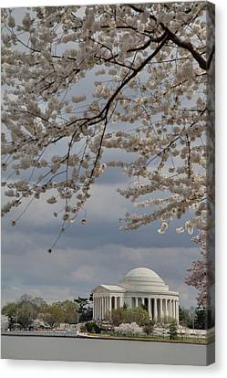 Cherry Blossoms With Jefferson Memorial - Washington Dc - 011313 Canvas Print by DC Photographer