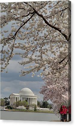 Cherry Blossoms With Jefferson Memorial - Washington Dc - 011314 Canvas Print by DC Photographer