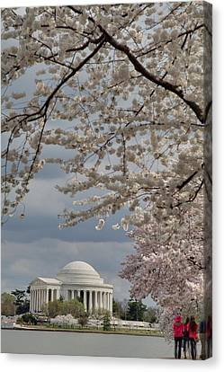 Cherry Blossoms With Jefferson Memorial - Washington Dc - 011315 Canvas Print by DC Photographer