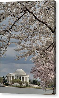 Cherry Blossoms With Jefferson Memorial - Washington Dc - 011316 Canvas Print