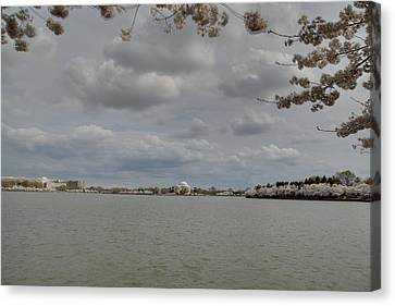 Blossoms Canvas Print - Cherry Blossoms With Jefferson Memorial - Washington Dc - 011319 by DC Photographer
