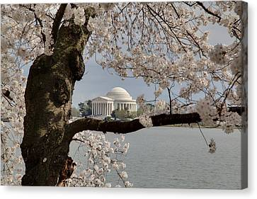 Cherry Blossoms With Jefferson Memorial - Washington Dc - 011322 Canvas Print by DC Photographer