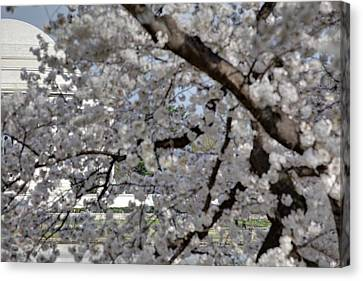 Cherry Blossoms With Jefferson Memorial - Washington Dc - 011333 Canvas Print by DC Photographer