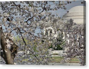Memorials Canvas Print - Cherry Blossoms With Jefferson Memorial - Washington Dc - 011335 by DC Photographer