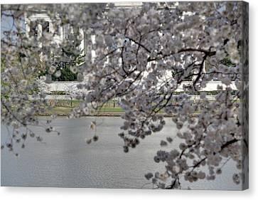 Japan Canvas Print - Cherry Blossoms With Jefferson Memorial - Washington Dc - 011337 by DC Photographer