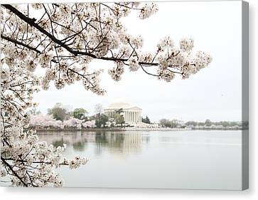 Cherry Blossoms With Jefferson Memorial - Washington Dc - 011344 Canvas Print by DC Photographer