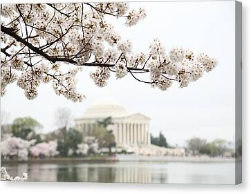Cherry Blossoms With Jefferson Memorial - Washington Dc - 011346 Canvas Print by DC Photographer