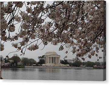 Cherry Blossoms With Jefferson Memorial - Washington Dc - 011347 Canvas Print by DC Photographer