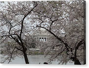 Cherry Blossoms With Jefferson Memorial - Washington Dc - 011352 Canvas Print by DC Photographer