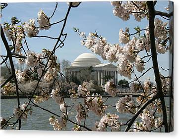Cherry Blossoms With Jefferson Memorial - Washington Dc - 01138 Canvas Print by DC Photographer
