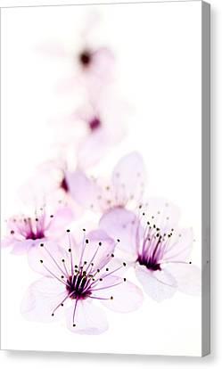 Cherry Cascade Canvas Print by Rebecca Cozart
