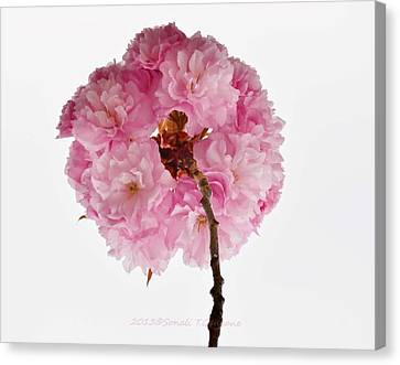 Cherry Globe Canvas Print
