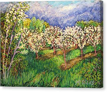 Cherry Orchard Glow Canvas Print by Madonna Siles
