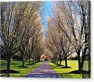 Cherry Tree Lane Canvas Print