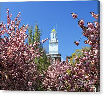 Canvas Print featuring the photograph Cherry Trees And Village Hall by Jose Oquendo