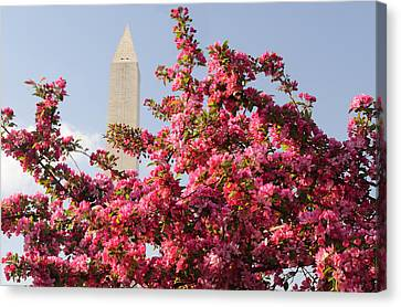 Canvas Print featuring the photograph Cherry Trees And Washington Monument 5 by Mitchell R Grosky