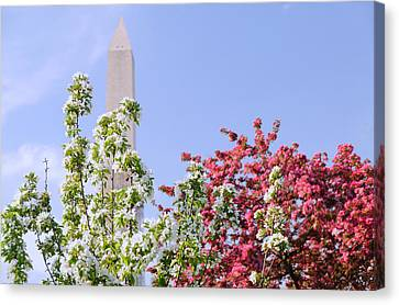 Canvas Print featuring the photograph Cherry Trees And Washington Monument Four by Mitchell R Grosky