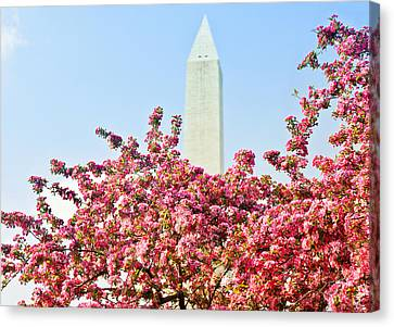 Cherry Trees And Washington Monument Two Canvas Print by Mitchell R Grosky