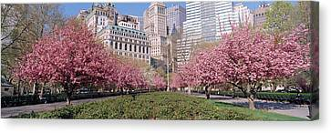 Cherry Trees, Battery Park, Nyc, New Canvas Print by Panoramic Images