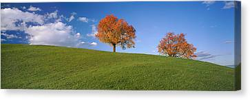 Cherry Trees On A Hill, Cantone Zug Canvas Print by Panoramic Images