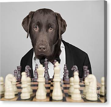 Chess Dog Canvas Print by Justin Paget