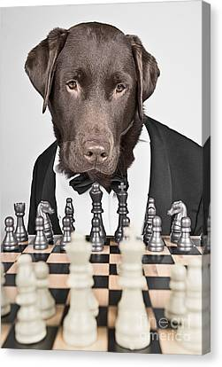 Chess Master Dog Canvas Print by Justin Paget