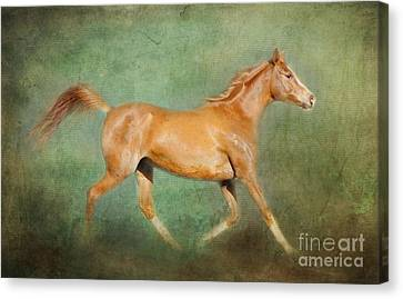 Chestnut Arabian Horse Trotting Canvas Print