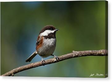 Chestnut Backed Chickadee Perched On A Branch Canvas Print
