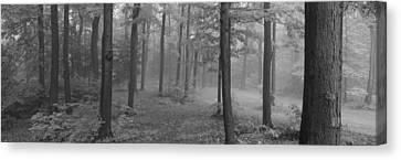 Forest Floor Canvas Print - Chestnut Ridge Park, Orchard Park, New by Panoramic Images