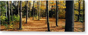 Forest Floor Canvas Print - Chestnut Ridge Park Orchard Park Ny Usa by Panoramic Images