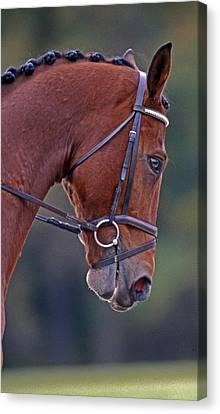 Chestnut Horse Canvas Print - Chestnut by Skip Willits