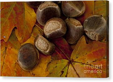 Chestnuts And Fall Leaves Canvas Print by Wilma  Birdwell