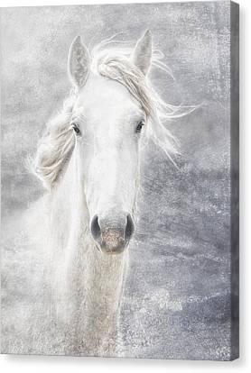 cheval de la Camargue Canvas Print