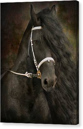 Horse In Art Canvas Print - Chiaroscuro by Fran J Scott