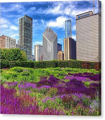 Chicago Skyline At Lurie Garden Canvas Print by Paul Velgos