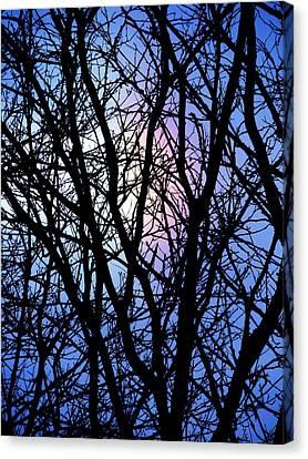 Chicago Winter Rainbow Canvas Print by Todd Sherlock