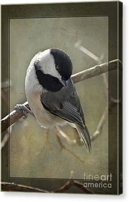 Chickadee Early Bird I Canvas Print by Debbie Portwood
