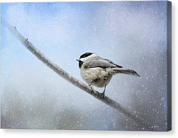 Chickadee In The Snow Canvas Print by Jai Johnson