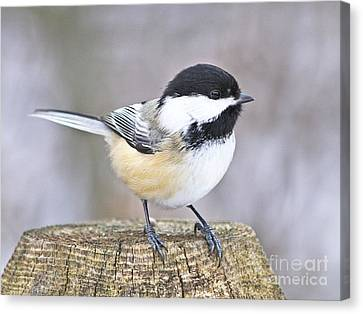 Chickadee On A Used To Be Tree Canvas Print by Heather King