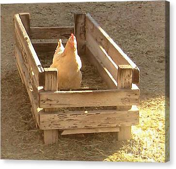 Canvas Print featuring the photograph Chicken In A Box by Cristophers Dream Artistry
