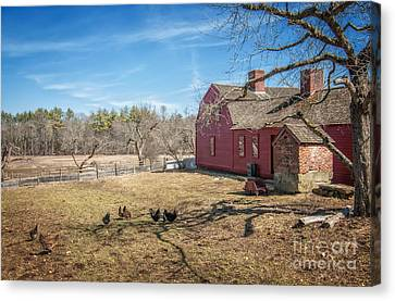 Chickens In The Yard Canvas Print by Scott Thorp