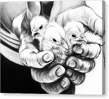 Canvas Print featuring the drawing Chickens by Natasha Denger