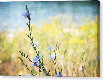 Canvas Print featuring the photograph Chicory By The Beach by Peggy Collins